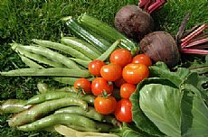 Food and Growing -